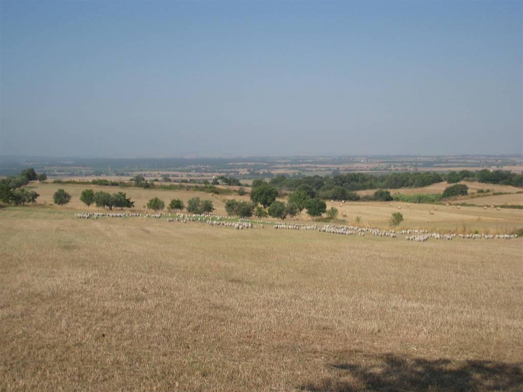 terreno Vendita Viterbo