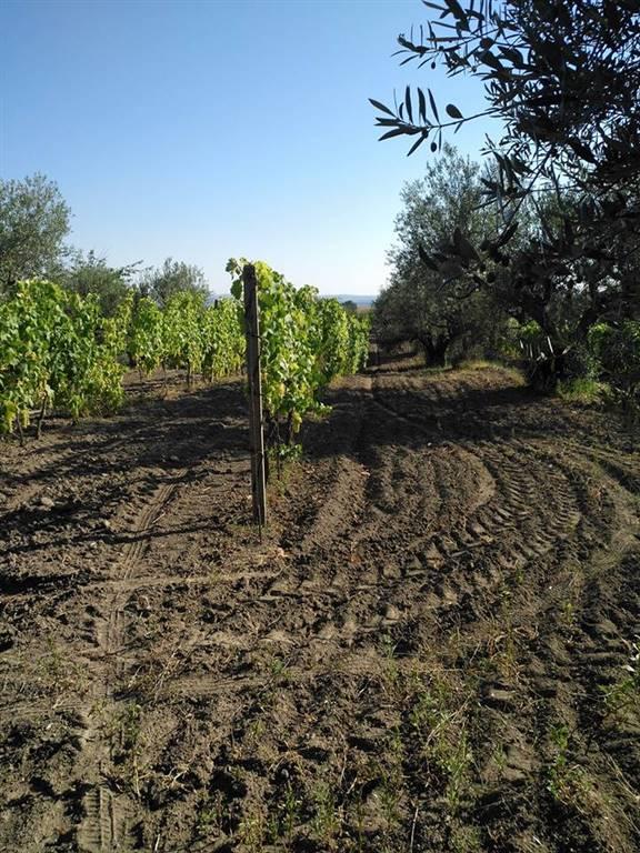 agriturismo-azienda agricola Vendita Montefiascone