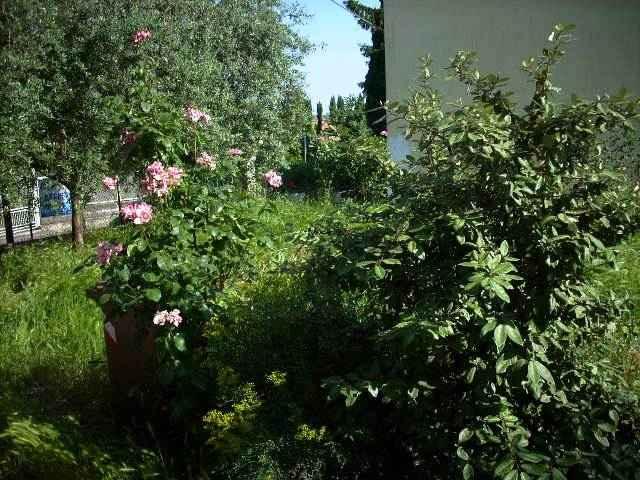 Soluzione Indipendente in vendita a Este, 6 locali, prezzo € 185.000 | Cambio Casa.it