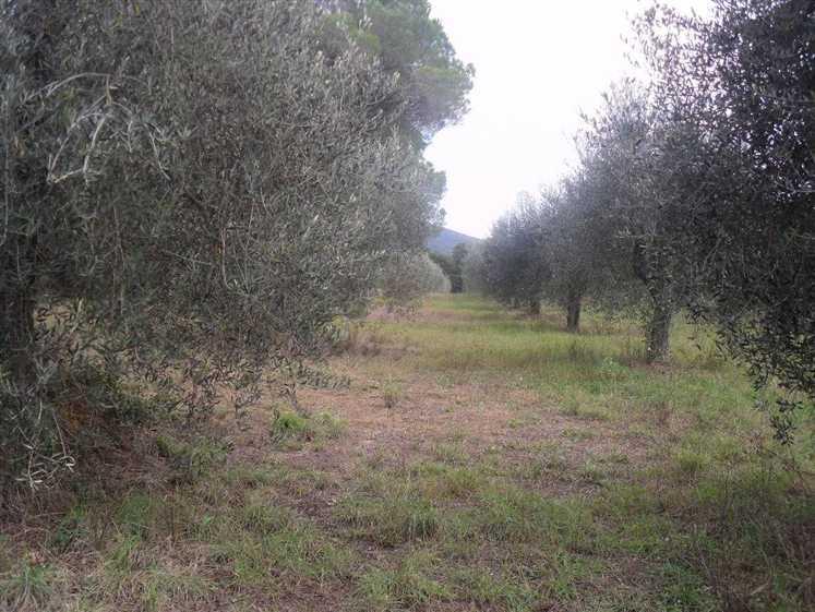Terreno Agricolo in Vendita a Castiglione della Pescaia