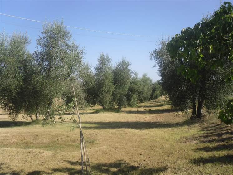 Foto - Terreno In Vendita Cinigiano