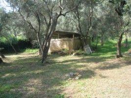 Terreno Agricolo in vendita a Pietrasanta, 9999 locali, zona Località: PIETRASANTA CENTRO, prezzo € 150.000 | Cambiocasa.it