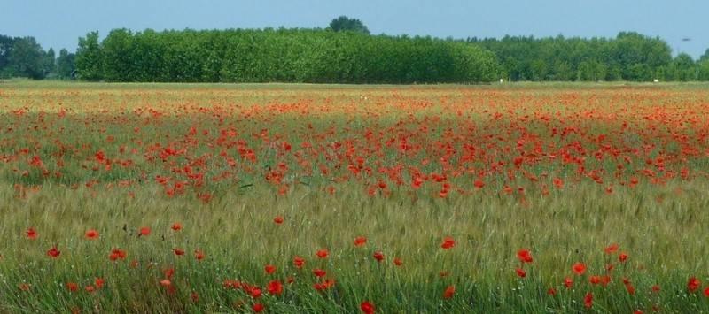 Terreno Agricolo in vendita a Camaiore, 9999 locali, prezzo € 19.000 | Cambio Casa.it
