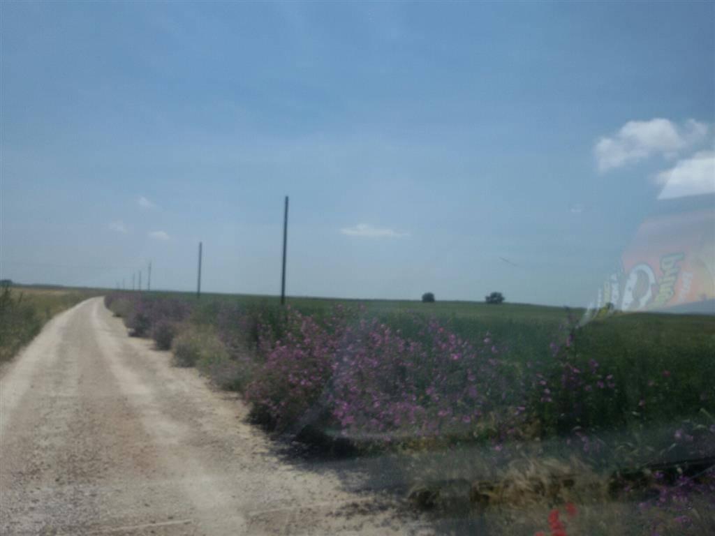 agriturismo-azienda agricola Vendita Lucera