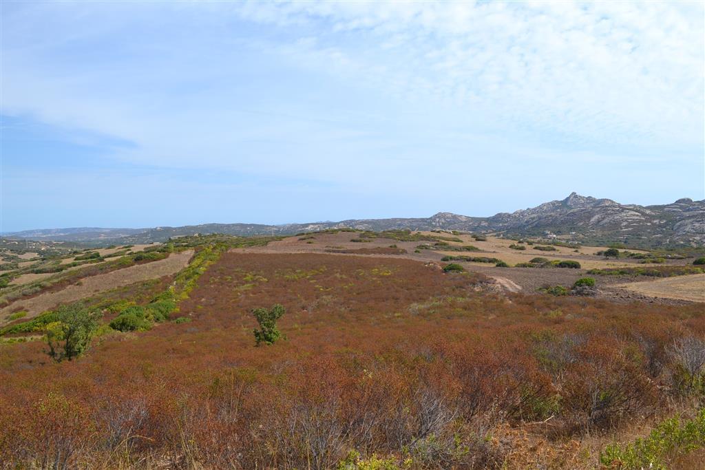 Terreno Agricolo in Vendita a Arzachena - Porto Cervo