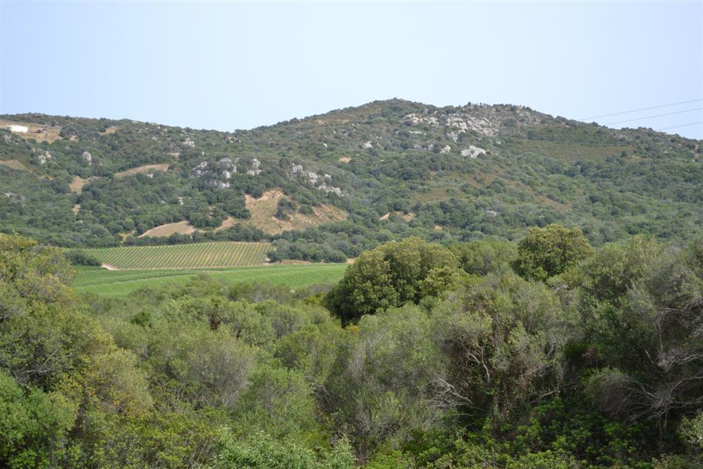 Terreno Agricolo in vendita a Arzachena - Porto Cervo, 9999 locali, zona Zona: Padula d'Izzana (Cudacciolu), prezzo € 180.000 | CambioCasa.it