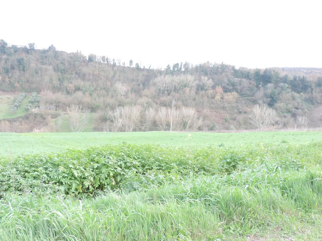 Case celleno compro casa celleno in vendita e affitto su - Diritto di passaggio su terreno agricolo ...