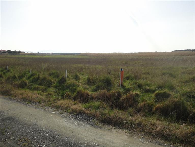 Terreno Agricolo in Vendita a Cecina