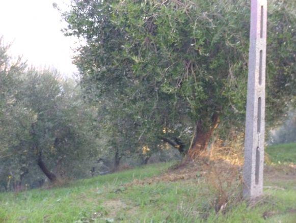 agriturismo-azienda agricola Bilocale in Vendita a Teramo
