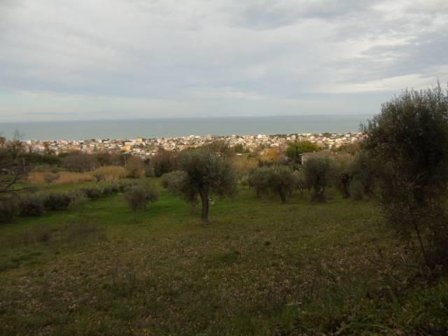 terreno edificabile Vendita Tortoreto