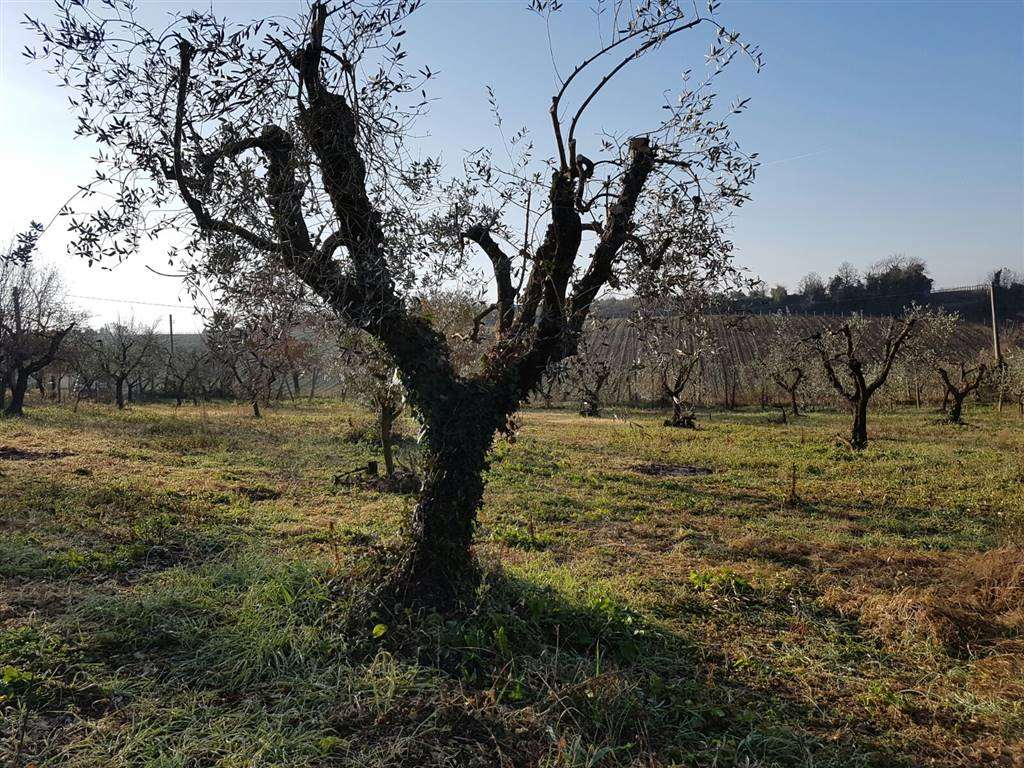 Terreno Agricolo in vendita a Cori, 9999 locali, prezzo € 80.000 | Cambio Casa.it
