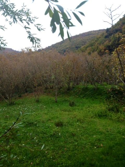 Foto - Terreno In Vendita Giffoni Valle Piana