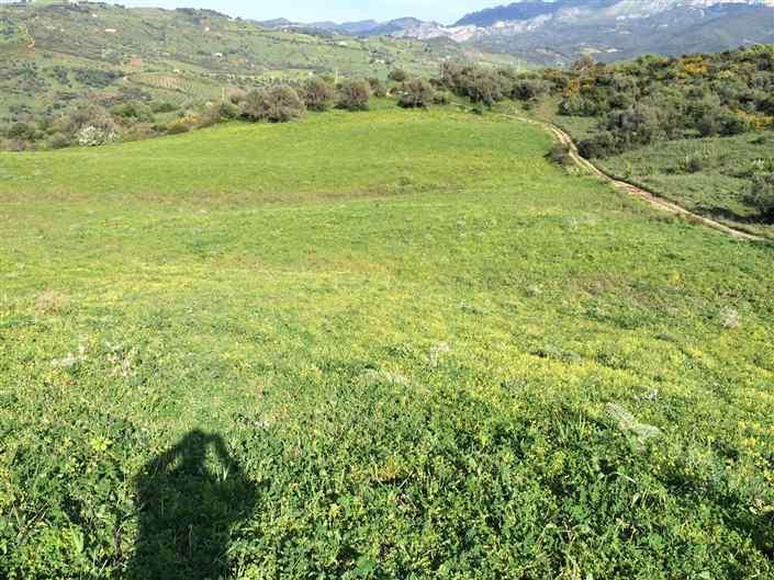 Terreno Agricolo in vendita a Collesano, 9999 locali, prezzo € 60.000 | Cambio Casa.it