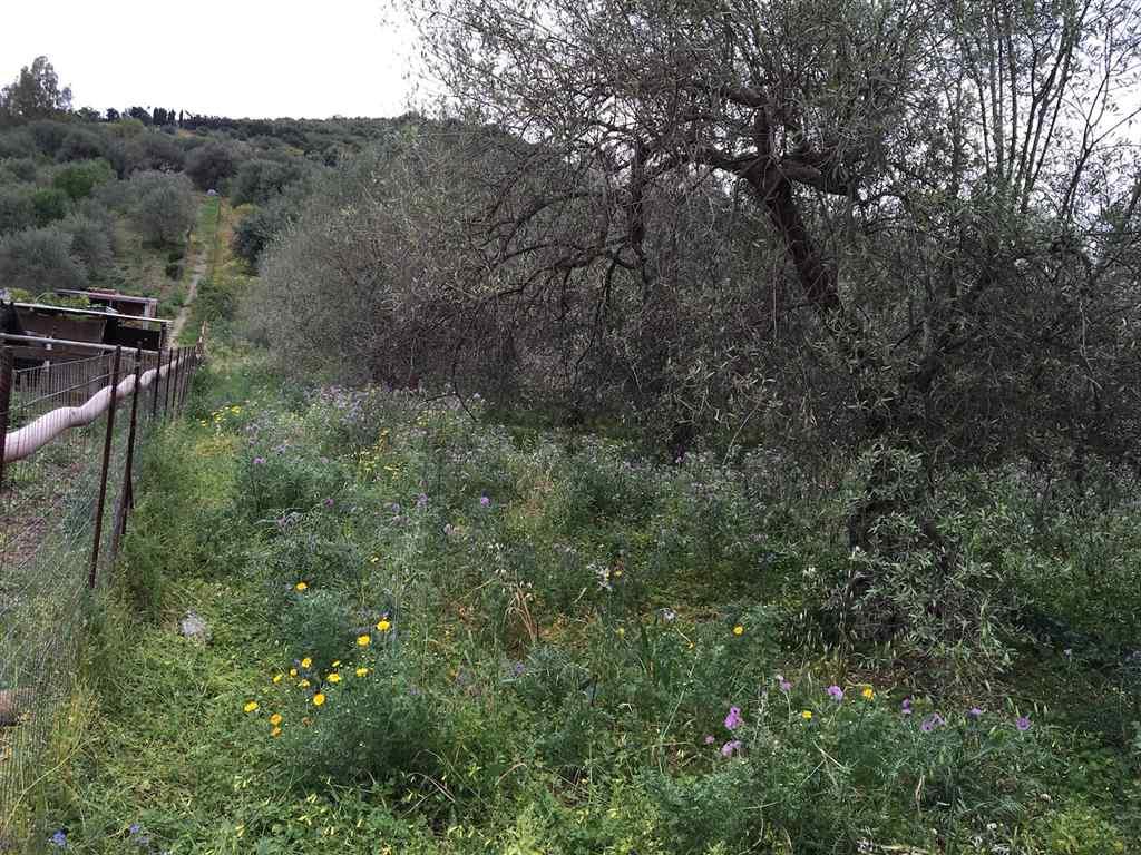 Terreno Agricolo in vendita a Campofelice di Roccella, 9999 locali, prezzo € 48.000 | Cambio Casa.it