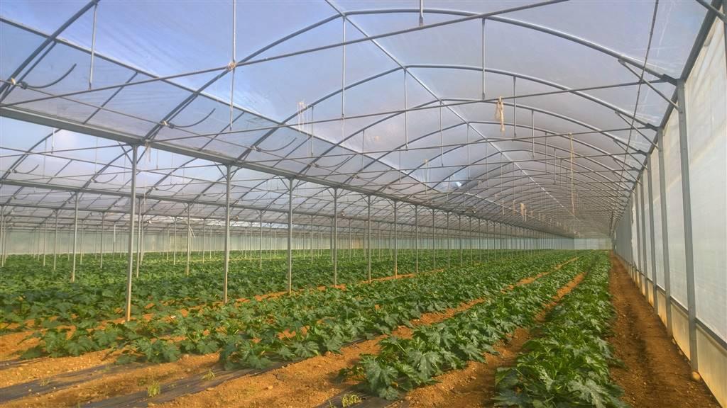 agriturismo-azienda agricola Vendita Medea