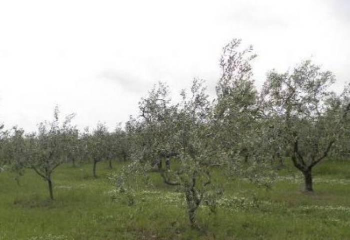 Terreno Agricolo in vendita a Falconara Marittima, 9999 locali, zona Località: BARCAGLIONE, prezzo € 33.000 | Cambio Casa.it