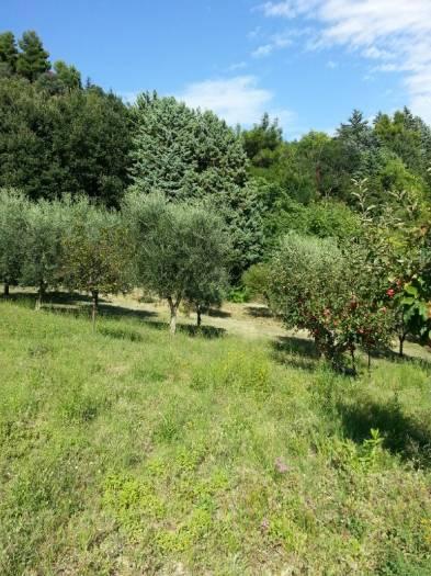 Terreno Agricolo in Vendita a Ancona
