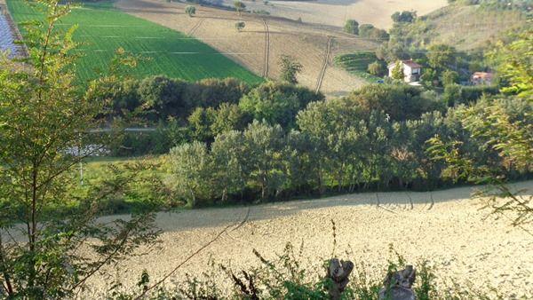 Terreno Agricolo in vendita a Ancona, 9999 locali, zona Zona: Casine di Paterno, prezzo € 100.000 | Cambio Casa.it