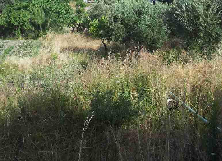 Terreno Agricolo in vendita a Messina, 9999 locali, zona Zona: Sud, Trattative riservate   Cambio Casa.it