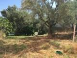 Terreno Edificabile Residenziale in vendita a Cosenza, 9999 locali, zona Località: BORGO PARTENOPE, prezzo € 60.000 | CambioCasa.it