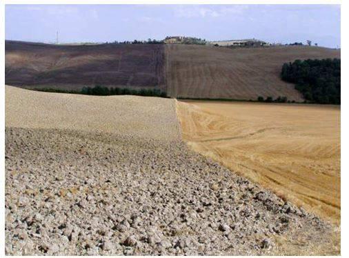Azienda Agricola in vendita a Asciano, 1 locali, zona Zona: Arbia, prezzo € 10.000.000   Cambio Casa.it