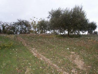 Rustico-casale in Vendita Offida in provincia di Ascoli Piceno