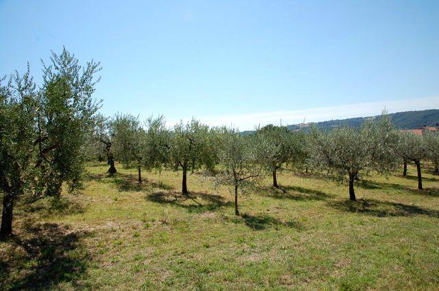 Terreno Edificabile Residenziale in Vendita a Gualdo Cattaneo