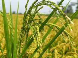 Terreno Agricolo in Vendita a Mortara