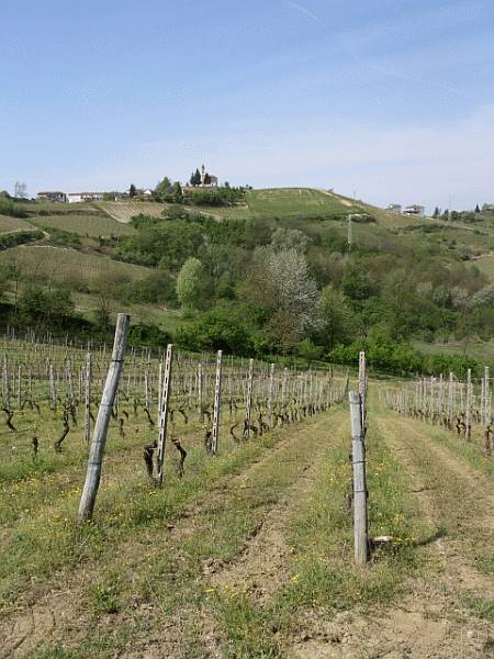 Azienda Agricola in vendita a Predosa, 10 locali, Trattative riservate | Cambio Casa.it