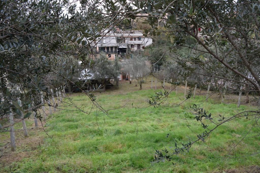 terreno edificabile  in Vendita a Frascati