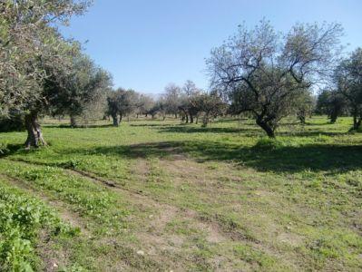 Terreno Edificabile Residenziale in vendita a Sciacca, 9999 locali, Trattative riservate | CambioCasa.it