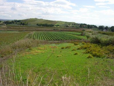 Terreno vendita MENFI (AG) - 7 LOCALI - 9820 MQ