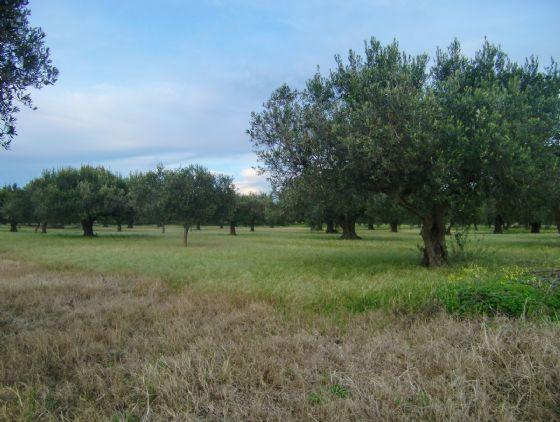 Terreno Agricolo in vendita a Menfi, 9999 locali, zona Località: C. DA BELICE, prezzo € 50.000 | Cambio Casa.it