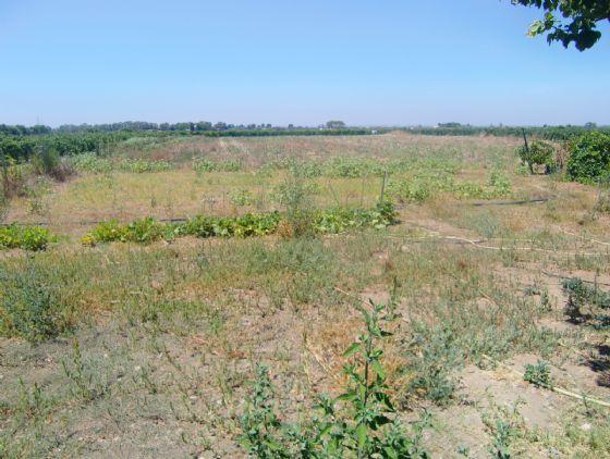 Terreno Edificabile Residenziale in vendita a Menfi, 9999 locali, zona Località: PORTO PALO, Trattative riservate | CambioCasa.it