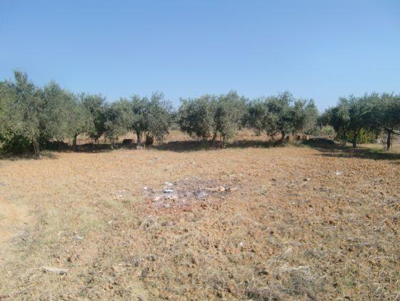 Terreno Agricolo in vendita a Menfi, 9999 locali, zona Località: C.DA AGARENI, Trattative riservate | Cambio Casa.it