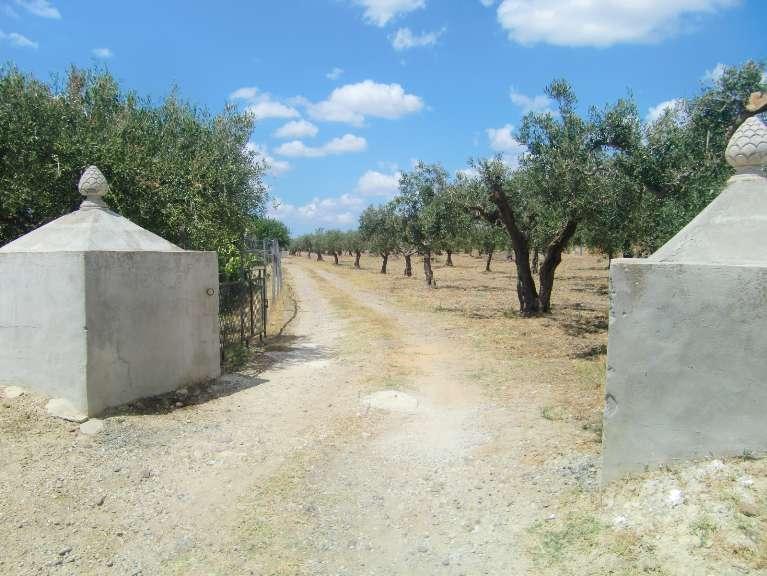 terreno  in Vendita a Castelvetrano