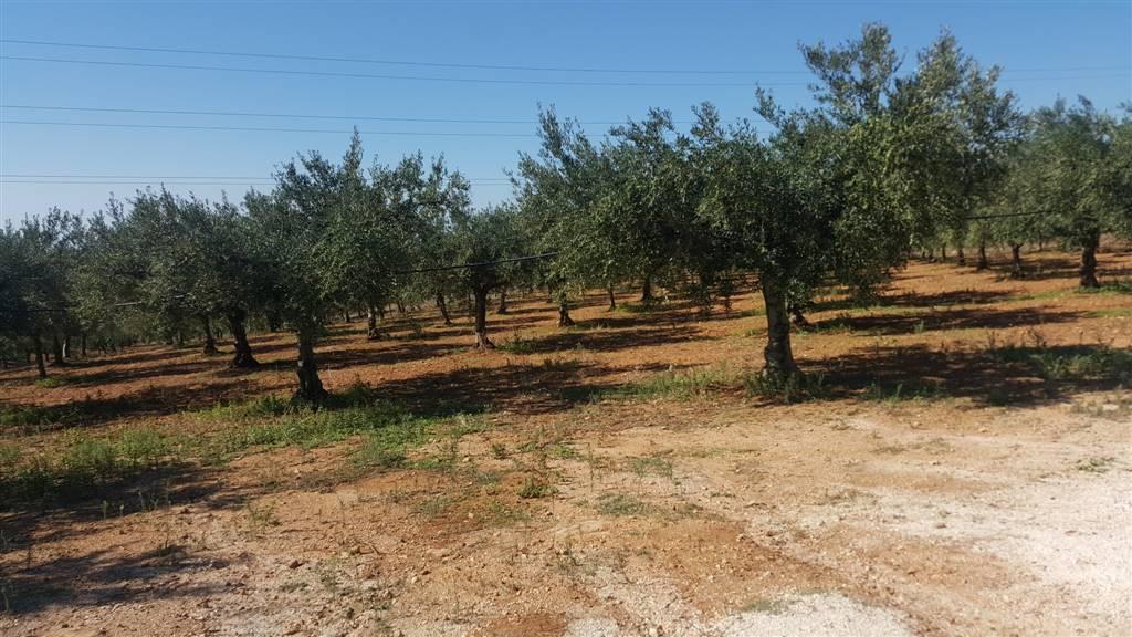 Terreno Agricolo in vendita a Sambuca di Sicilia, 9999 locali, prezzo € 450.000 | CambioCasa.it
