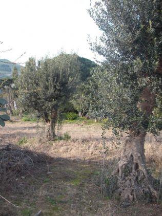 Terreno Edificabile Residenziale in vendita a Salemi, 9999 locali, zona Località: FONTANABIANCA, prezzo € 28.500 | Cambio Casa.it