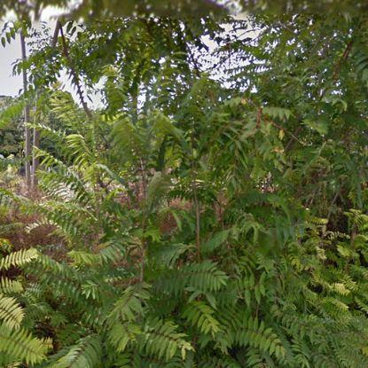 Terreno Edificabile Residenziale in Vendita a Salemi