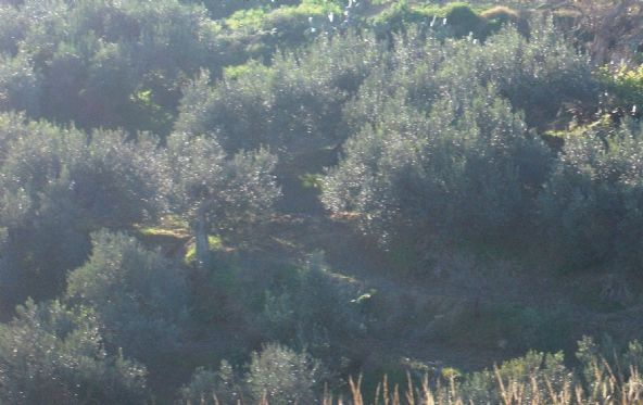 Terreno Edificabile Residenziale in vendita a Salemi, 9999 locali, zona Località: SAN GIUSEPPE, prezzo € 18.000 | Cambio Casa.it