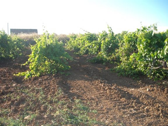 Azienda Agricola in vendita a Salemi, 9999 locali, zona Località: MASSERIA VECCHIA, prezzo € 180.000 | CambioCasa.it