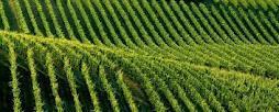 Terreno Agricolo in vendita a Castelvetrano, 9999 locali, Trattative riservate | Cambio Casa.it
