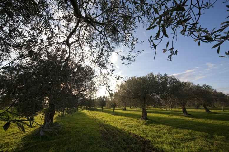 Terreno Agricolo in vendita a Salemi, 9999 locali, zona Località: BARONIA, prezzo € 15.000 | Cambio Casa.it