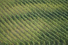 Terreno Agricolo in vendita a Partanna, 9999 locali, prezzo € 20.000 | Cambio Casa.it