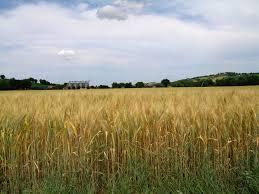 Terreno Agricolo in vendita a Salemi, 9999 locali, prezzo € 140.000 | Cambio Casa.it
