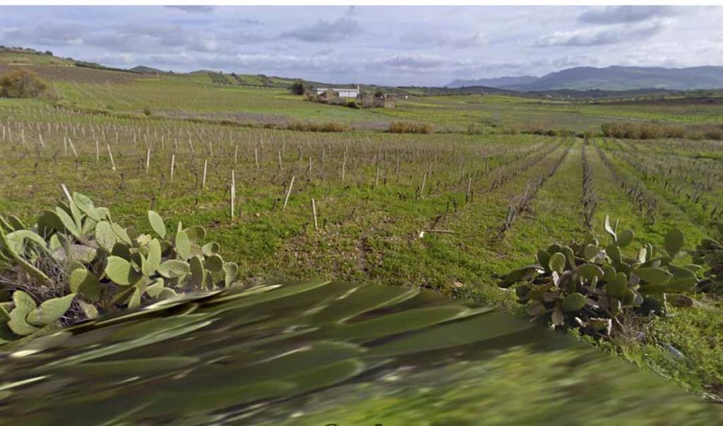 Terreno Agricolo in Vendita a Salemi
