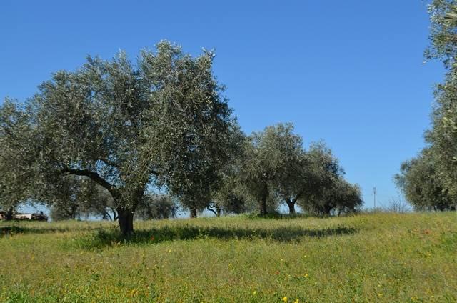 Terreno Edificabile Residenziale in vendita a Viterbo, 9999 locali, zona Zona: Periferia, prezzo € 110.000 | CambioCasa.it