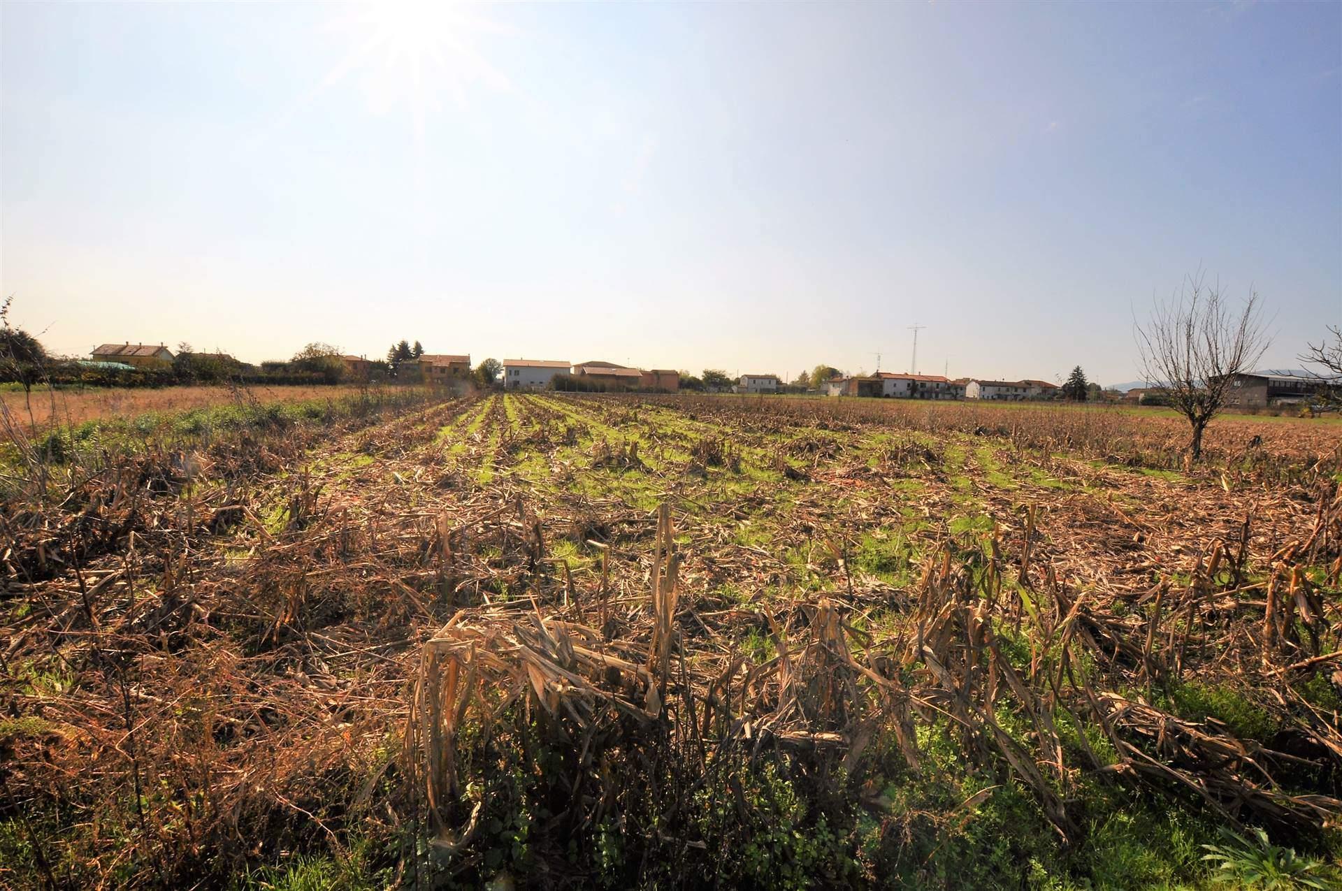 Terreno agricolo PONTE BUGGIANESE