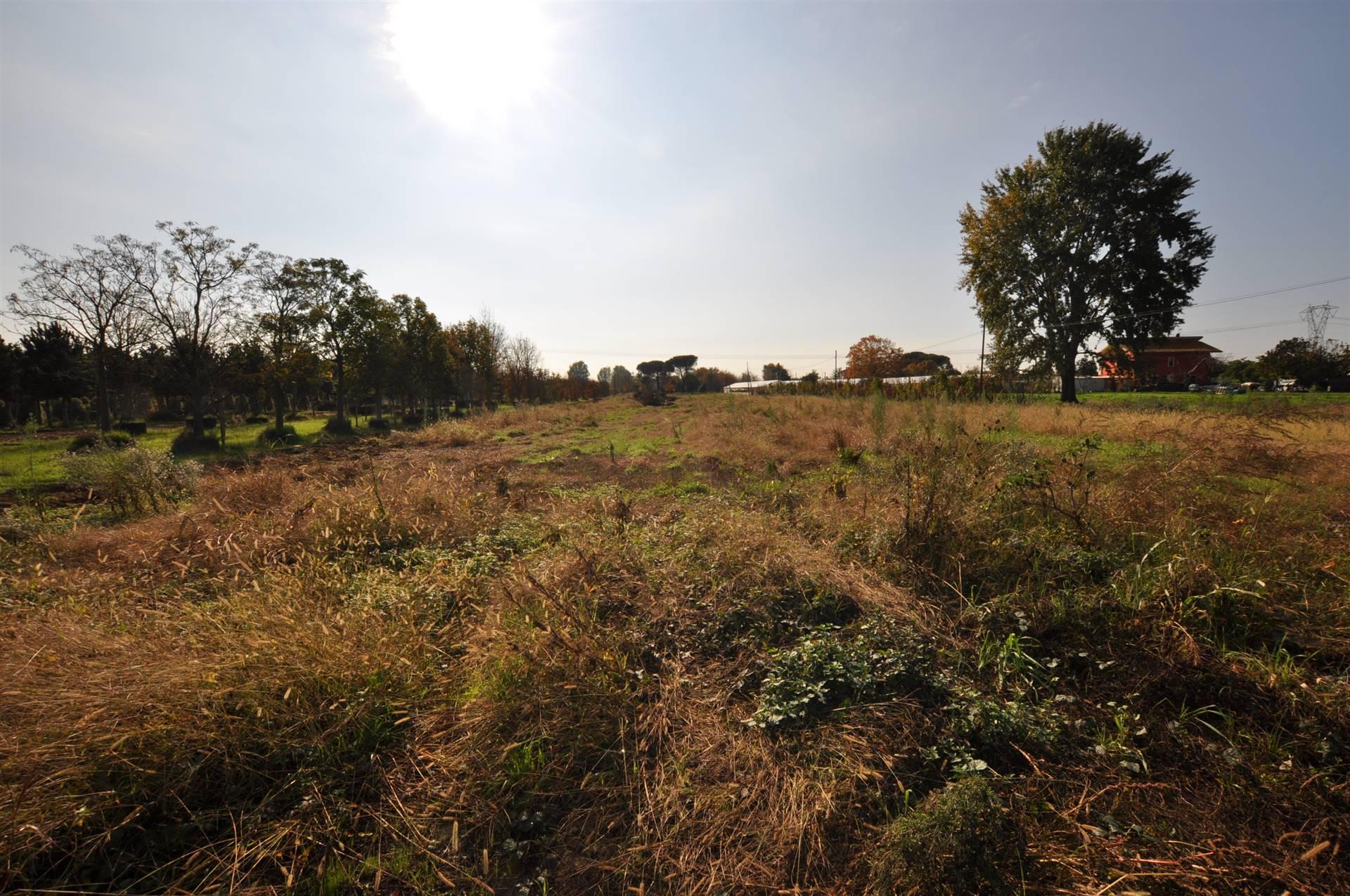 Terreno edificabile PONTE BUGGIANESE