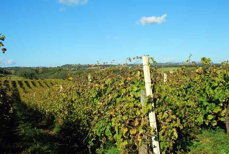 Terreno Agricolo in Vendita a Viterbo